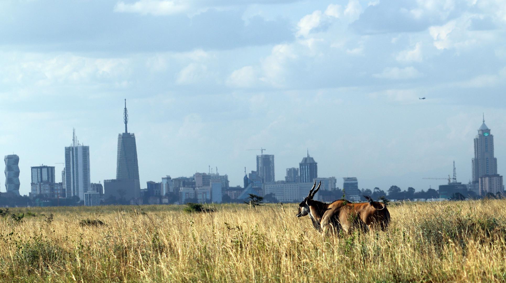 Eland-in-Nairobi-National-Park