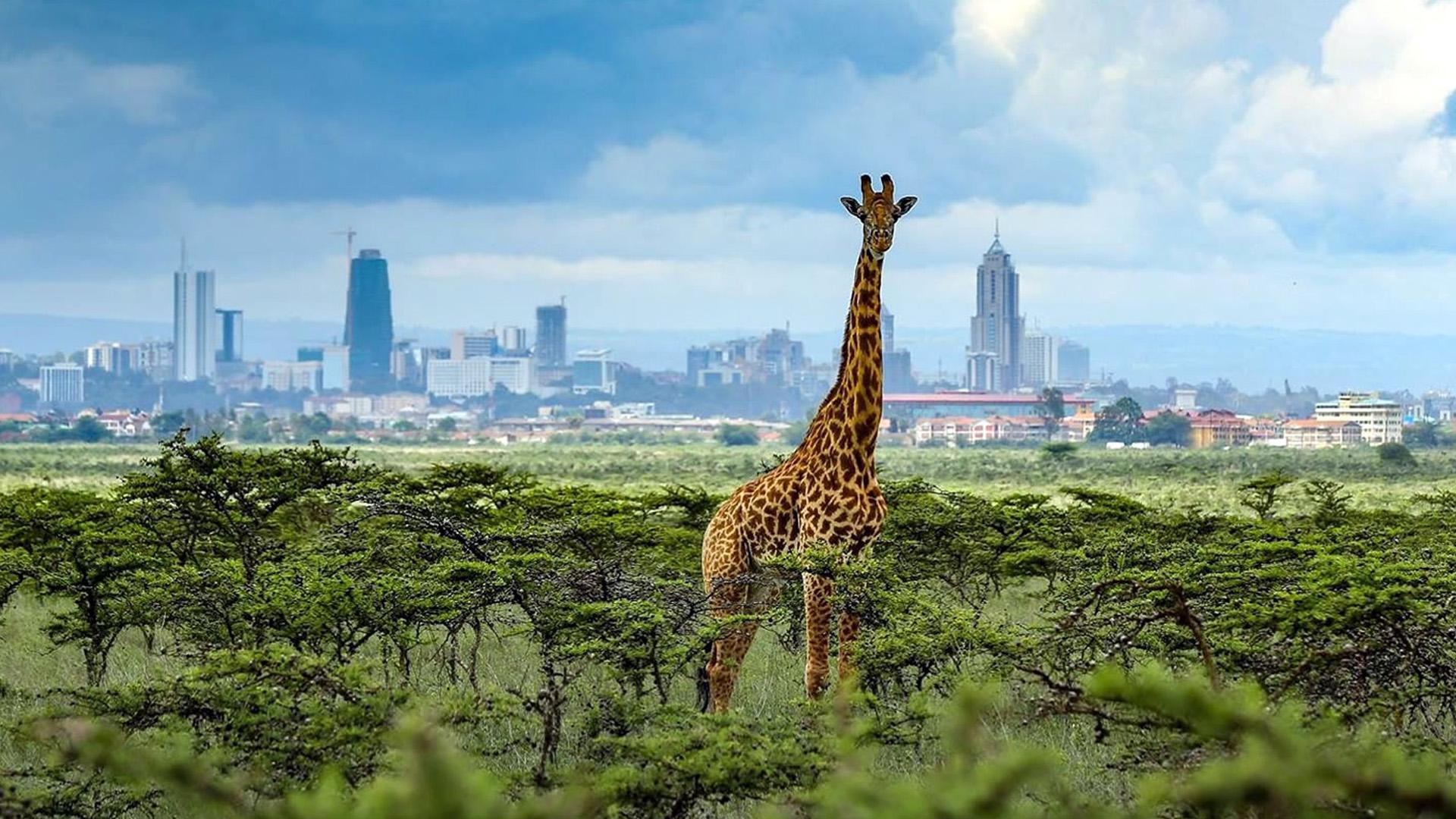 Nairobi National Park DMC