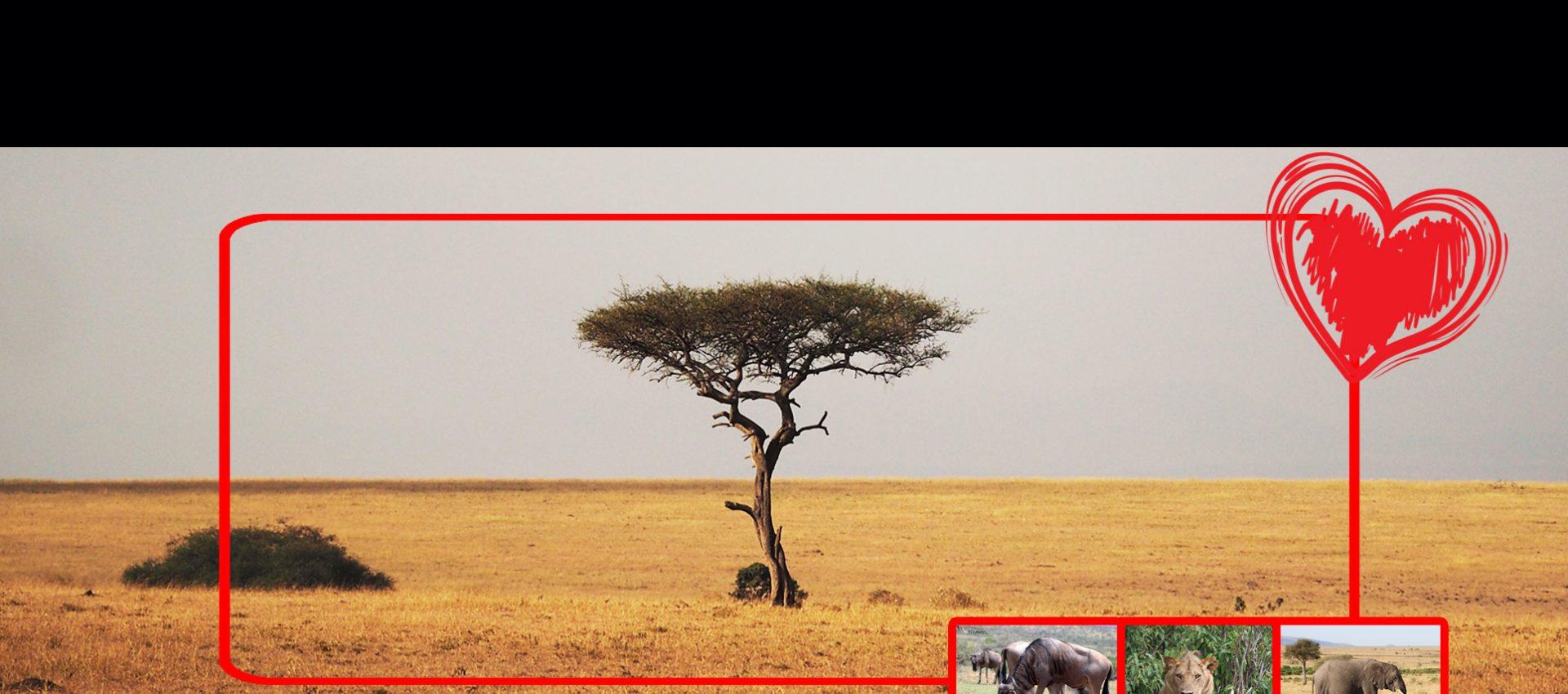 Masai Mara Valentine Offers Cover